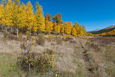 Photograph - Colorado Autumn Trail by Cascade Colors