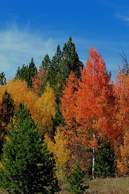 Photograph - Colorado Autumn by Trent Mallett
