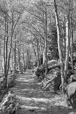 Food And Flowers Still Life Rights Managed Images - Colorado Black and White Photography - Aspen Leaves Trail in RMN Royalty-Free Image by Rob Greebon