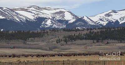 Photograph - Colorado Cattle Ranch by Amber Kresge