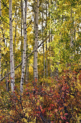 Photograph - Colorado Changing Eight    by Eric Rundle