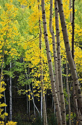 Photograph - Colorado Changing Two  by Eric Rundle