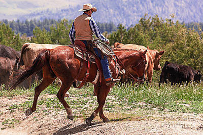 Cattle Drive Photograph - Colorado Cowboy Cattle Drive by Janice Rae Pariza