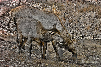 Fruits And Vegetables Still Life - Colorado Elk in Sepia by Janice Pariza