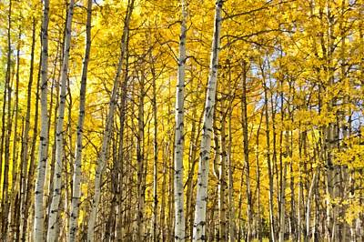 Colorado Fall Aspens 5 Art Print