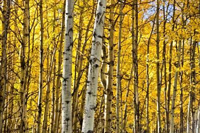 Outside Mixed Media - Colorado Fall Aspens 7 by Angelina Vick