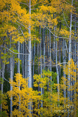 Aspen Fall Colors Photograph - Colorado Fall Color by Inge Johnsson
