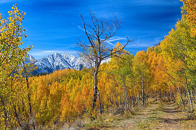 Autumn Photograph - Colorado Fall Foliage Back Country View by James BO  Insogna