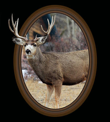 Out Of Frame Mixed Media - Colorado Muley by Shane Bechler