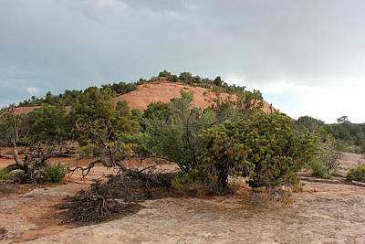 Photograph - Colorado National Monument 15 by Mary Bedy