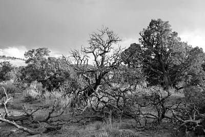 Photograph - Colorado National Monument Landscape Bw by Mary Bedy