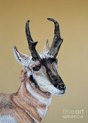 Pastel - Colorado Plains Antelope by Ann Marie Chaffin