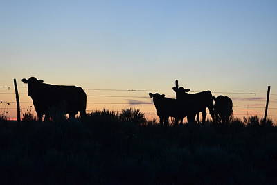 Photograph - Colorado Cattle Silhouettes by Clarice  Lakota