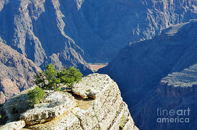 Great Outdoors Photograph - Colorado River South Rim Overlook Grand Canyon National Park by Shawn O'Brien