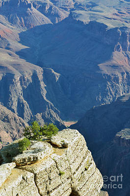 Colorado River South Rim Overlook Grand Canyon National Park Vertical Art Print by Shawn O'Brien