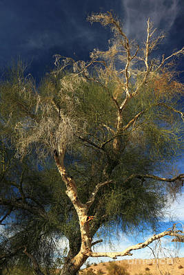 Photograph - Colorado River Tamarisk by James Eddy