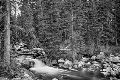 Photograph - Colorado Rocky Mountain Forest Stream Bw by James BO Insogna