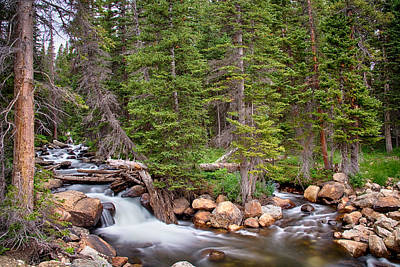 Photograph - Colorado Rocky Mountain Forest Stream by James BO Insogna