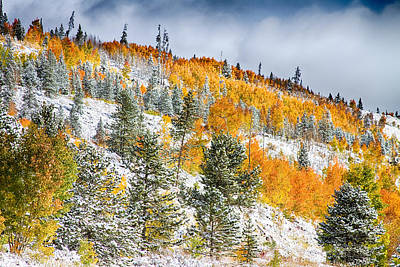 Corporate Art Photograph - Colorado Rocky Mountain Snowy Autumn Colors by James BO  Insogna