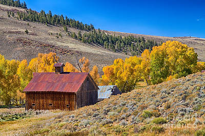 Photograph - Colorado Rustic Rural Barn With Autumn Colors  by James BO  Insogna