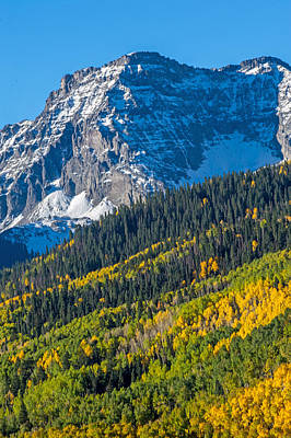 Photograph - Colorado Snow Capped Mountain And Forest Of Trees by Willie Harper
