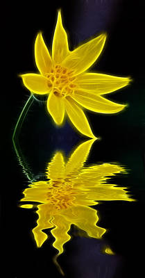 Reflection Photograph - Colorado Wildflower by Shane Bechler