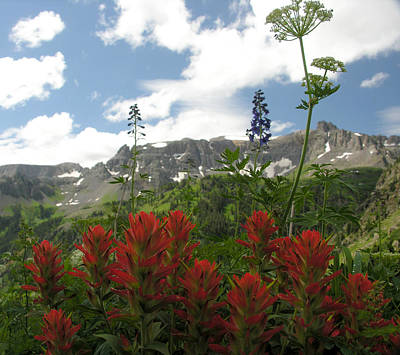 Photograph - Colorado Wildflowers by Robert Lozen