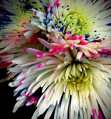 Photograph - Colorburst Fuji Spider Mum by Michelle Frizzell-Thompson