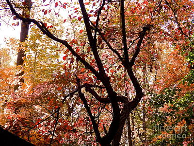 Photograph - Colored Forest by John Potts