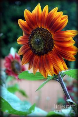 Oktoberfest Digital Art - Colored Sunflower by Kay Novy