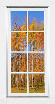 World War 2 Action Photography - Colorful Aspen Tree View White Window by James BO Insogna