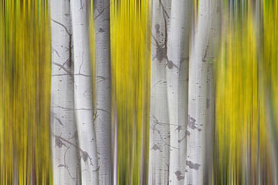 Icm Photograph - Colorful Autumn Aspen Tree Colonies Dreaming by James BO  Insogna