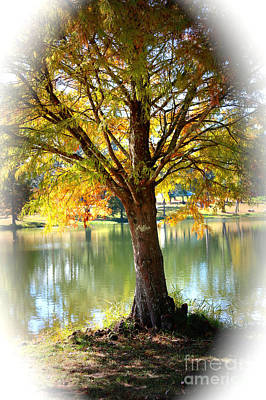Photograph - Colorful Autumn Cypress With Vignette by Carol Groenen