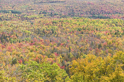 Photograph - Colorful Autumn Forest In Mount Blue State Park Weld Maine by Keith Webber Jr