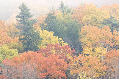 Photograph - Colorful Autumn Trees In Fog by Keith Webber Jr