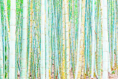 Photograph - Colorful Bamboo by Alexander Kunz
