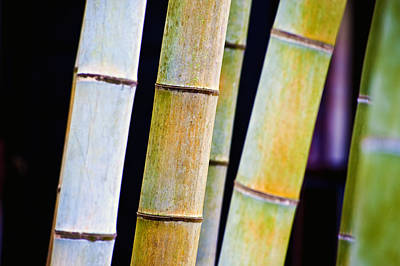 Photograph - Colorful Bamboo by Bill Brennan - Printscapes