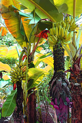 Photograph - Colorful Banana Trees Key West by Rebecca Korpita
