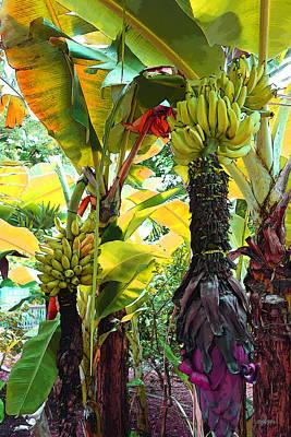 Photograph - Colorful Banana Trees Key West by Rebecca Korpita