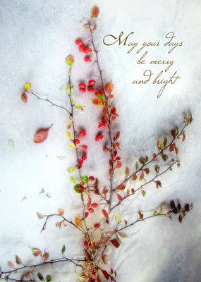 Photograph - Colorful Barberries Christmas Card by Louise Kumpf