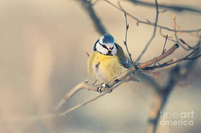Photograph - Colorful Bird Sitting On A Thin Branch by Jaroslaw Blaminsky
