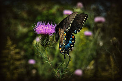 Photograph - Colorful Butterfly by Amber Summerow