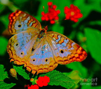 Photograph - Colorful Butterfly by Tracey McQuain
