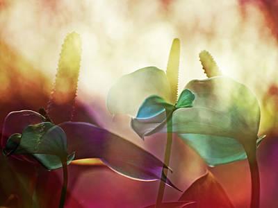 Colorful Calla Art Print by Eiwy Ahlund