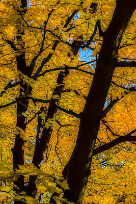 Photograph - Colorful Canopy by Albert Seger