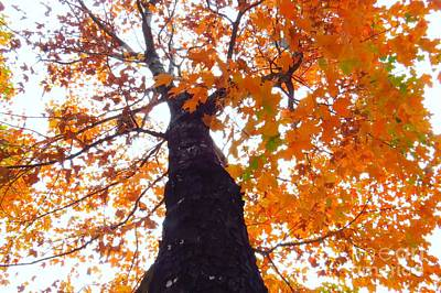 Red Photograph - Colorful Canopy by Scott Cameron