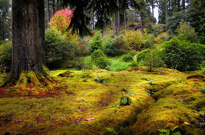 Photograph - Colorful Carpet Of Moss In Benmore Botanical Garden by Jenny Rainbow