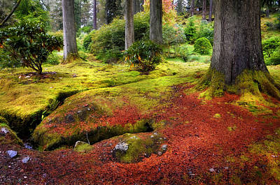 Photograph - Colorful Carpet Of Moss In Benmore Botanical Garden. Scotland by Jenny Rainbow