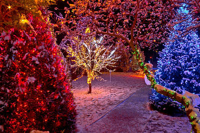 Photograph - Colorful Christmas Lights On Trees by Brch Photography