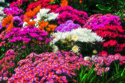 Photograph - Colorful Chrysanthemums by Mike Martin